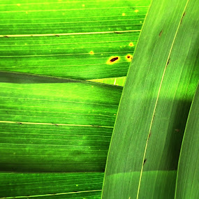 horizontal and vertical green by Glenn Bobiles - Nature Up Close Leaves & Grasses