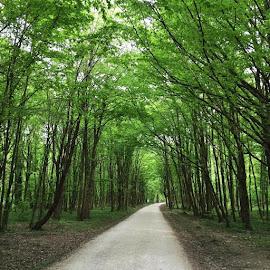 by Ivana Tilošanec - Nature Up Close Trees & Bushes