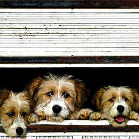 `we want out ...` by Boricic Goran - Animals - Dogs Portraits