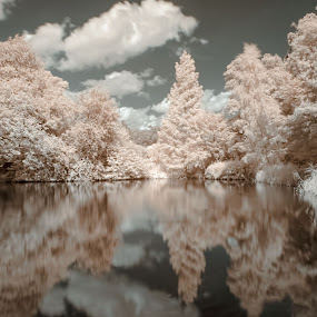 by Becky Wheller - Landscapes Waterscapes ( reflection, infraredmlake, trees, landscape )