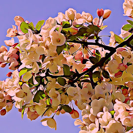 In Bloom by Irina Aspinall - Digital Art Things ( trees, pink, bloom, cherry blossom, flowers )
