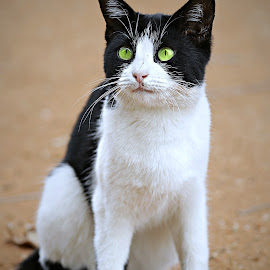 Now what? by Pieter J de Villiers - Animals - Cats Portraits