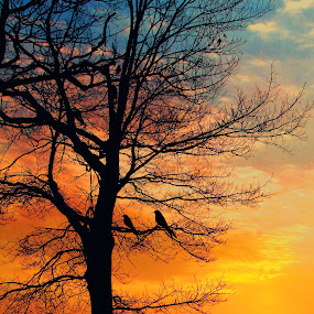 sunrise silhouette by David Pratt - Nature Up Close Trees & Bushes ( nature, silhouette, trees, landsacape, sunrise )