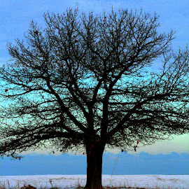 Winter Beach Blues by Nancy Tonkin - Landscapes Beaches ( illinois, winter, tree, beach, blues,  )