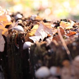 Autumn Colors #1 by Ovidiu Gruescu - Nature Up Close Mushrooms & Fungi