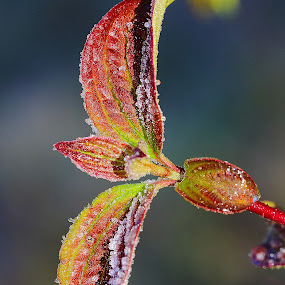 Frozen leaves by Gérard CHATENET - Nature Up Close Leaves & Grasses