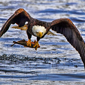 Easy Catch by Mark Theriot - Animals Birds