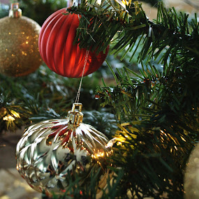 Red and Gold by Anika McFarland - Public Holidays Christmas ( red, christmas, christmas tree, gold, red and gold,  )