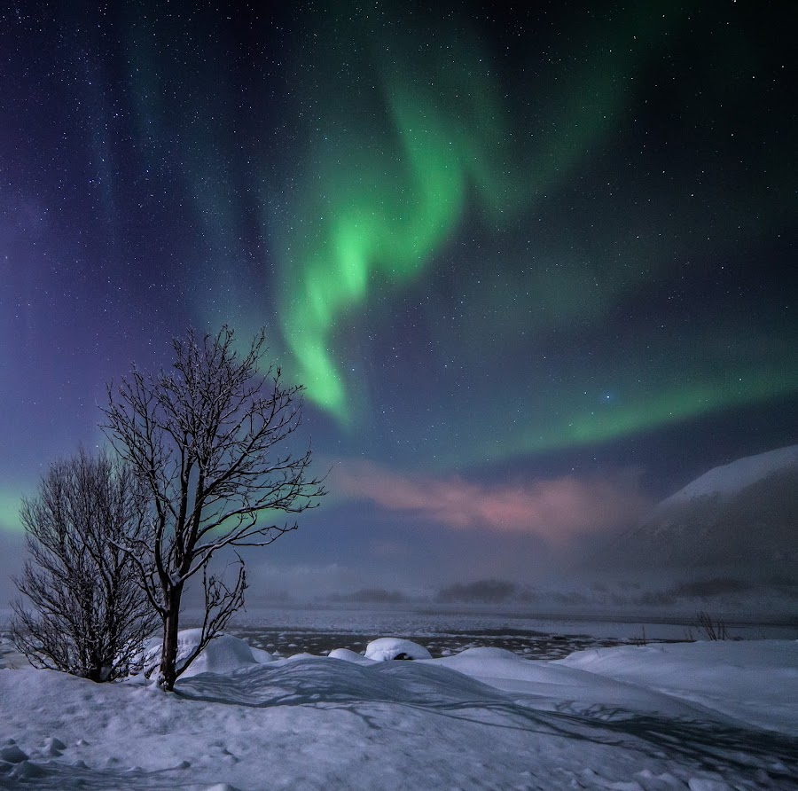 Winter wonderland by Benny Høynes - Landscapes Starscapes ( canon, bennyhøynes, fog, ice, snow, aurora, boreoalis, norway, garyfonglandscapes, holiday photo contest, photocontest )