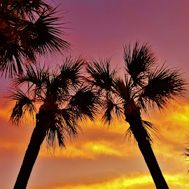 Palmetto Morning Silhouettes by Matthew Beziat - Landscapes Cloud Formations ( jensen beach, treasure coast, dawn, florida, florida mornings, silhouette, palmetto, morning silhouettes, palm silhouettes, sunrise, palmetto palms, hutchinson island )