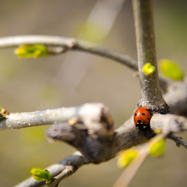 First days of spring by Davidescu Catalin - Nature Up Close Gardens & Produce