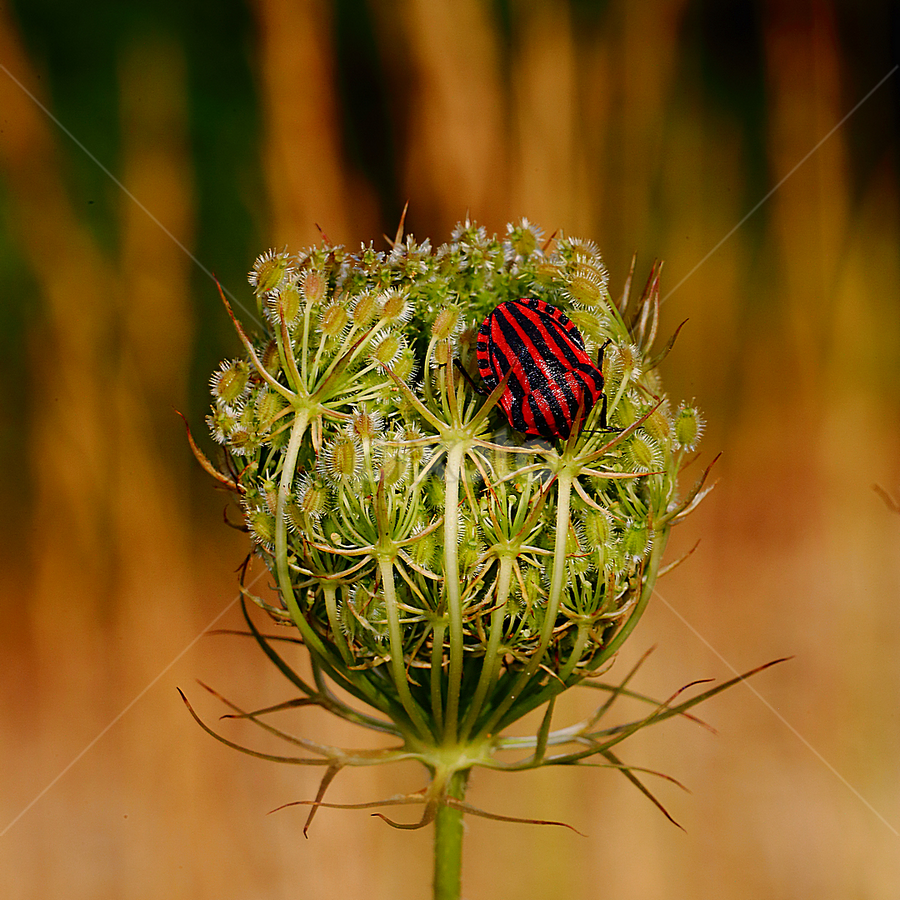 Panet by Gérard CHATENET - Nature Up Close Other plants