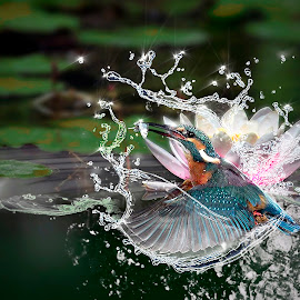 Kingfisher by Kevin Baxter - Digital Art Animals ( water, bird, fish, digital art, kingfisher, fishing, birds )