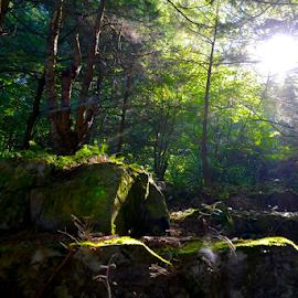 by Liz Rosas - Landscapes Forests ( moss, forest, sunlight, rocks, backlight, vermont, bolders, backlit )