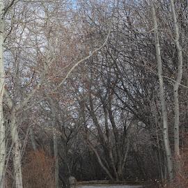 by Maddie Siemens - City,  Street & Park  City Parks
