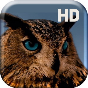 Amazing Owl Live Wallpaper