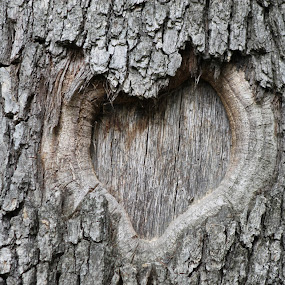 Heart by Mitzi Sibert - Landscapes Forests ( heart, wood, tree )