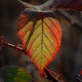 A different view by Sue Delia - Nature Up Close Leaves & Grasses ( fall, leave, autumn, sun,  )