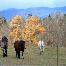 BEAUTY WILD by Cynthia Dodd - Novices Only Wildlife ( field, sky, nature, horses, grass, fall, trees, animal )