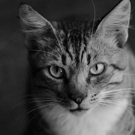 by Simona Ciglenean - Black & White Animals