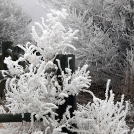 Frosted Fence by Deb Tomoi - Landscapes Prairies, Meadows & Fields