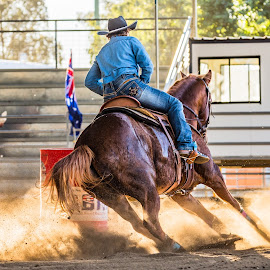 Dusty Highlights 2 by Sarah Sullivan - Sports & Fitness Other Sports