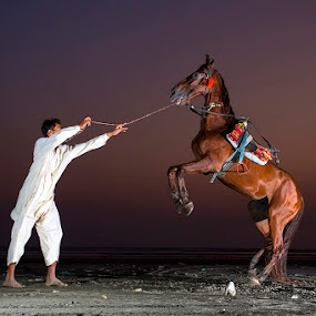 Horse in the Blue Hour by Israr Shah - Animals Horses ( horses, sunset, karachi, blue hour, horse, sea view, israrshah )