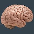 Free Memory Spell ! - Spelling Game APK for Windows 8