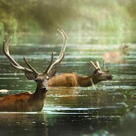 by Zlatko Borenovic - Animals Other Mammals ( animals, nature )