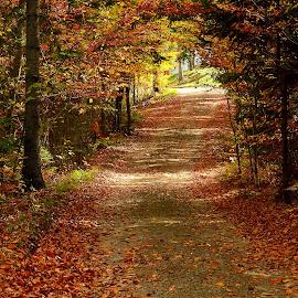 Autumn by Miloš Karaklić - Landscapes Travel (  )