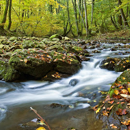 by Siniša Almaši - Nature Up Close Water ( water, natural light, stream, forest, morning, landscape, leaves, colours, .up close, nature, autumn, cascade, view, light, river )