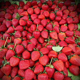 Florida Strawberries by Michael Villecco - Food & Drink Fruits & Vegetables ( fruit, florida, strawberries, wintertime, berries )