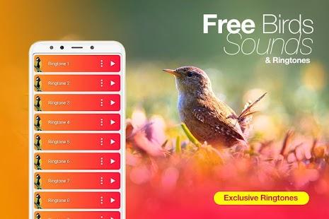Best Birds Ringtones & Bird Sounds 2020 for pc
