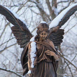 Statue by Tina Marie - Buildings & Architecture Statues & Monuments ( bronze, angel, statue, wings, snow, cemetery )