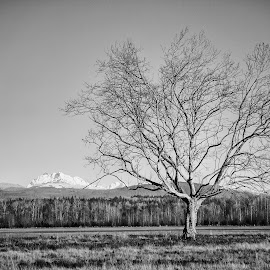Lone tree  by Todd Reynolds - Black & White Landscapes