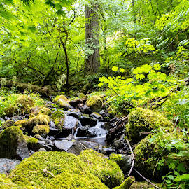 Oregon Creek by Greg Head - Novices Only Landscapes ( water, oregon, green, creek, moss, leaves )