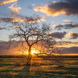 Good Morning by Linda Richardson - Landscapes Sunsets & Sunrises ( clouds, tree, sun burst, sunrise, landscape )