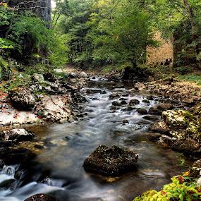 Old Mill rack by Matej Skubic - Landscapes Waterscapes ( water, mill, greens, old mill, sink, rack, leaves )
