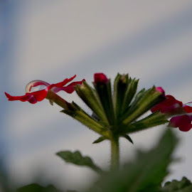 Water droplets by Deblina Bhunia - Nature Up Close Gardens & Produce ( water drops, plants, flowers,  )