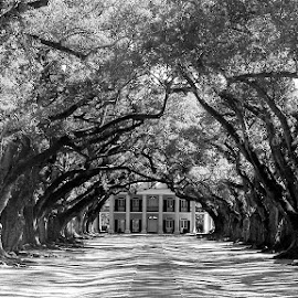 Plantation in New Orleans by Brandon Meyer - Buildings & Architecture Public & Historical ( building, black and white, trees, plantation )