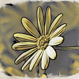 Daisy Art by Mary Malinconico - Digital Art Things
