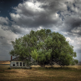 Protected by the Tree by Eric Demattos - Buildings & Architecture Decaying & Abandoned ( clouds, school house, oregon, sky, tree, eric demattos, storm, jordan valley, abandoned )