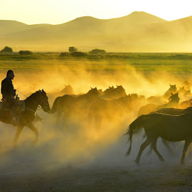 Horses by Mustafa Tor - Animals Horses ( animals, horses, turkey, men, yellow )