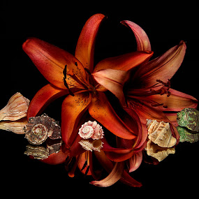 by Todd Klingler - Flowers Single Flower (  )