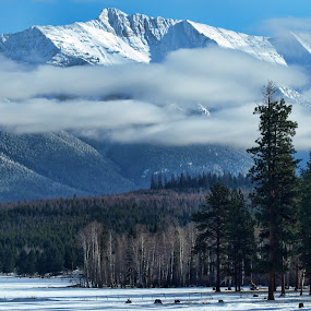 The Bob Marshall Wilderness by Diana Treglown - Landscapes Forests ( forests, mountains, wilderness, montana )