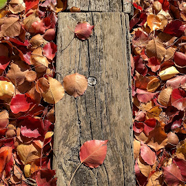 The Plank by Geoffrey Wols - Instagram & Mobile iPhone ( colour, leaves, tree, wood, autumn, plank,  )