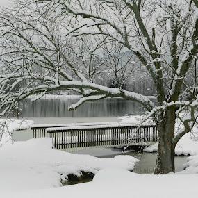 Snow Scene by Karen Carter Goforth - Landscapes Weather ( tree, snow, bridge,  )