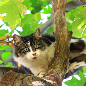 Tiny by Todd Ratisseau - Animals - Cats Playing ( maple tree, cute kitten, green eyes, beautiful kitten )