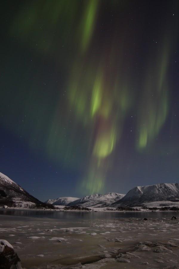 aurora boreoalis buksnes by Benny Høynes - Landscapes Starscapes ( nature, ice, buksnesfjorden, aurora, andøy )