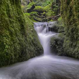 Milky Water by Marco Bertamé - Nature Up Close Water ( water, müllerthal, flowing, green, cascade, moss, white, long exposure, milky, luxembourg,  )
